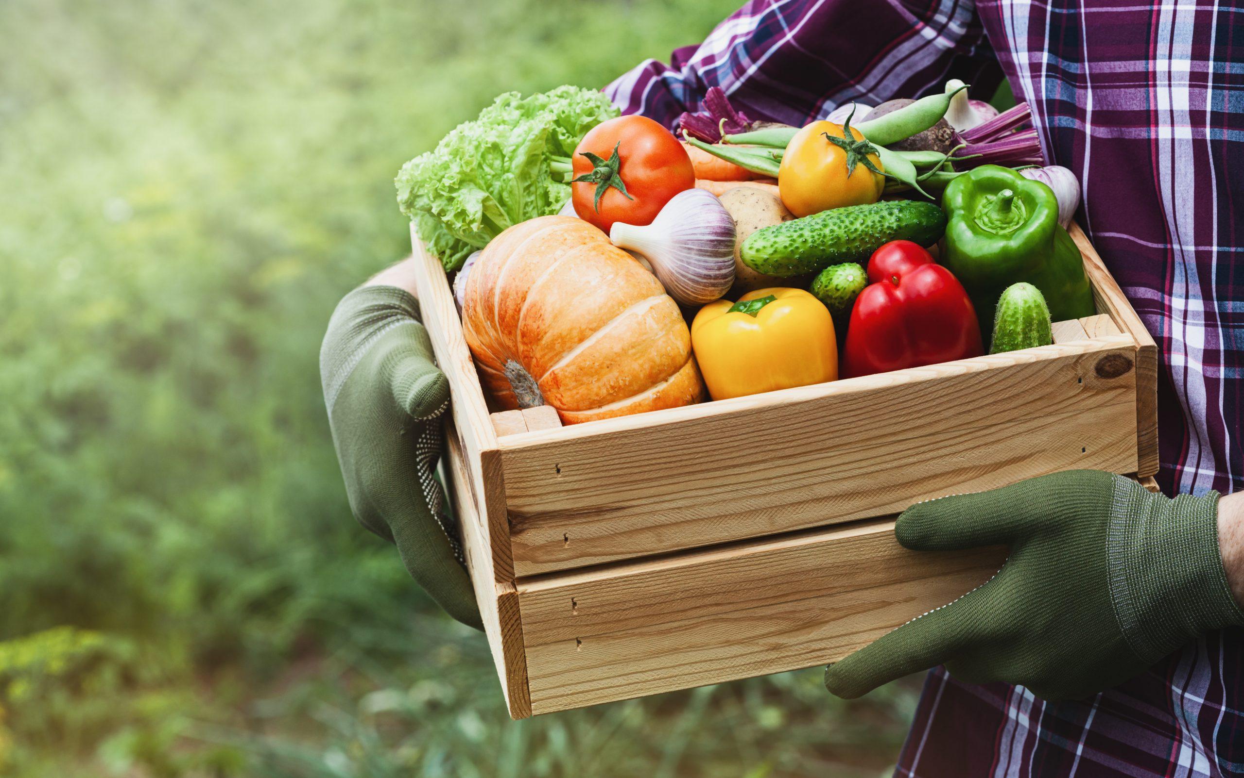 Garden Cort Explica Com Fer Un Hort A Casa Fem Cambrils